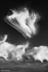 Pirouette (Fernando Delgado) Tags: pretoebranco blackandwhite sky céu fineart