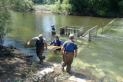 Removing a fish counting weir