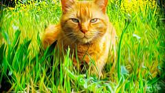flower power tiger🌺🐯🌺 (sugarelf) Tags: petportrait hammy mycat catfriendship cat filter nature grass flowers summer season catportrait oilpaintfilter