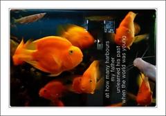 at how many harbours (fritzgessler) Tags: still animal fish poem