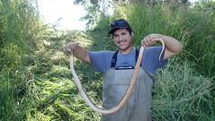 Large Gopher Snake