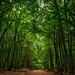 Waldweg / forest path