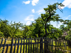 20190705-036 (sulamith.sallmann) Tags: architektur natur pflanzen baum botanik bäume deutschland europa gatter grosgölitz holzzaun laubbaum obstbaum obstbäume pflanze sommer sommerlich thüringen zaun sulamithsallmann