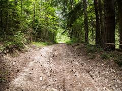 20190705-078 (sulamith.sallmann) Tags: landschaft natur pflanzen weg baum botanik bäume deutschland europa grosgölitz pflanze thüringen wald sulamithsallmann