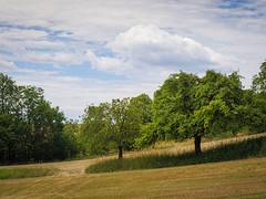 20190705-076 (sulamith.sallmann) Tags: landschaft natur pflanzen baum botanik bäume deutschland europa feld grosgölitz pflanze thüringen sulamithsallmann
