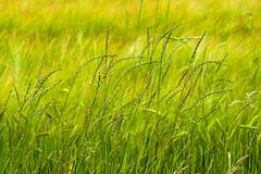 Grass (kh1234567890) Tags: panasonic tz100 zs100