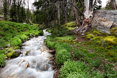 Flow with Gladness (RH Miller) Tags: rhmiller reedmiller water creek mountains idaho usa