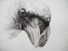 INQUISITIVE (Sketchbook0918) Tags: portrait bird animal drawing wildlife charcoal crow graphite avian nature illustration paper eyes fierce beak feather art fineart
