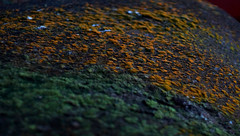 Life..on the rock (J316) Tags: j316 free texture rock mold fungus fungi plants yellow green