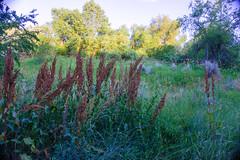 Great view of Nature (denebola2025) Tags: ogden utah summer nature park landscape