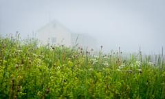 Herbes (Patrick Boily) Tags: voyage matane travel quebec maison house herbe brume fog
