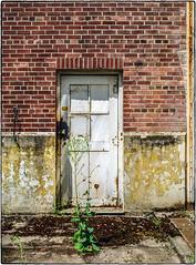 White Door (NoJuan) Tags: door doorway whitedoor film filmshooter filmcamera 35mm 35mmfilm 35mmslr canon canonefm canonfilmcamera shootingfilm magnusonpark seattlewa washingtonstate pacificnorthwest