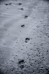 Fussspur im Sand (rofrhu) Tags: foot footprint fuss spur fussspur fussabdruck kies sand meer sw bw kinderfuss children urlaub sehnsucht weg robert hummer roberthummer nikon d7000 nostalgie wünsche sonne