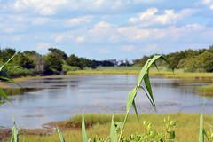 DSC_0651 (maddiebird101) Tags: beach corsonsinlet statepark nj newjersey shore jerseyshore wildlife nature naturephotography bird birds plane shell