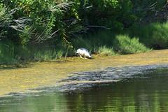 DSC_0624 (maddiebird101) Tags: beach corsonsinlet statepark nj newjersey shore jerseyshore wildlife nature naturephotography bird birds plane shell
