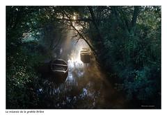 Lumière du marais (Bruno-photos2013) Tags: france bretagne brume brouillard brunolandry brière naturepaysage nature barque péniche plate lumière paysage paysdeloire reflets reflection landscape sunrise