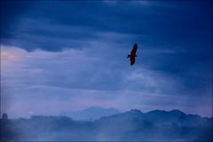 F7A0118-Canon 6D2-Tamron 28-300mm-May Lee 廖藹淳 (May-margy) Tags: maymargy 鳥 羽翼 雲彩 清晨 山巒 剪影 逆光 天馬行空鏡頭的異想世界 心象意象與影像 台灣攝影師 緬甸 f47a0118 bird backlighting silhouette clouds dawn featherandwings mylensandmyimagination naturalcoincidencethrumylens taiwanphotographer bagan myanmar canon6d2 tamron28300mm maylee廖藹淳