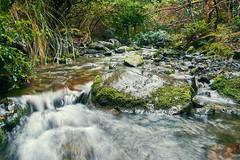 20190630-DSC_2733 (wangxu94) Tags: aotearoa newzealand nature glentuilooptrack forest mountthomasforestconservationarea canterbury river flow stream longexposure water
