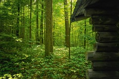 Loveliness Of Nature. (JACK TOME) Tags: forest yorkregion green summer ontario