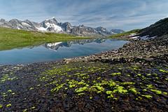 Alpine beauty (Tjaldur66) Tags: mountains mountainlake rocks peaks reflection moss switzerland centralswitzerland uri andermatt furkapass outdoor hiking wilderness landscape scenery glacier breathtakinglandscapes