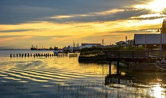 Liquid gold - Steveston Harbour (Christie : Colour & Light Collection) Tags: reflections reeds dock pier wharf harbour stevestonharbour stevestonvillage pilons pyons fishingvillage bc britishcolumbia canada boats fishboats goldenhour golden lighting light reflection richmond water waterreflections ripples outdoors nikon nikkor dslr evening brilliance skylight sky clouds fraserriver river silhouette