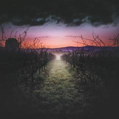 Val do Ulla (Noel F.) Tags: sony a7rii a7r ii fe 24105 g val ulla vedra boqueixon viño galiza galicia mencer sunrise vide vid videira
