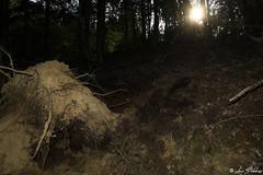 Light On Roots (Luca Bobbiesi) Tags: roots nature wood radici albero pino bosco trentinoaltoadige piandeipradi sdradicato flash canoneos5dmarkiv canonef1740mmf4lusm canonspeedlite580exii lowlight