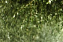 Дождь каплями летящий с крыши вниз, блики от скорости чертят полосы бледно-зеленого цвета, в эффекте боке зелень листвы. (Nanaccept) Tags: дождь каплями летящий крыши вниз блики скорости чертят полосы бледнозеленого цвета эффект боке зелень листвы фон