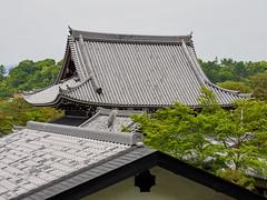 Paseando por el camino del filósofo (Philosopher's Walk) (Luis Pérez Contreras) Tags: viaje japón japan trip 2019 olympus m43 mzuiko omd em1x wanderlust travel kioto kyoto philosophers walk