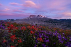 The Daily Dose (justin_crny24) Tags: seattle pnw photography a7riii photos cameras sony sunset mountain sainthelens flowers landscape washington