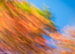 Autumn Palette (KRHphotos) Tags: abstract westvirginia cameramovement fallcolors trees monongahelanationalforest nature parsons unitedstates