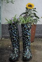 Upcycling (devonpaul) Tags: cc wellies wellington boots coloured colourful plantpot planter flowers butterflies recycling recycle upcycle upcycling rubber black blue