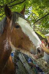 Horse (Rackelh) Tags: horse animal mammal petting spring pioneervillage toronto ontario canada