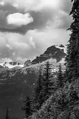 Eagle Pass (SNAPShots by Patrick J. Whitfield) Tags: blackandwhite bw bnw noire noiretblanc monochrome mountains outside nature life exploring adventure hiking trees trails canada light summer highlights details dof lines patterns textures pov clouds flickr rockies rocks