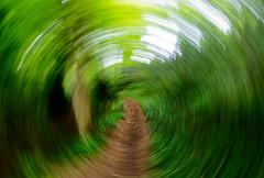 The Path (Pixelated Sky) Tags: track path blur dizzy icm circular green wood movement dscrx100m5 restful