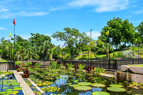 International Waterlily Collection inSan Angelo, Texas