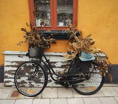 Rural (empty.and.void) Tags: bike rural denmark rustic dk danmark aero countrylife ærø aeroe marstal bikelife visitdenmark sydfynskeøhav govisitdenmark ærøisland opdagdanmark visitaeroe cozydenmark europe eu nordic citystreets scandinavia hygge hyggelig cityphotography gamlehuse nordicstyle nordicliving bestofscandinavia greatnorthcollective scandinavianhome agameoftones fahrrad europa norden skandinavien dänemark haus