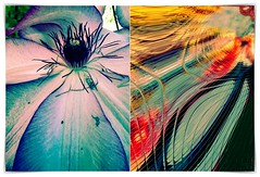 clematis truth (kazimierz.pietruszewski) Tags: abstract form composition digipaint digitalart concept graphic colorful border diptych 21 nabart flowers