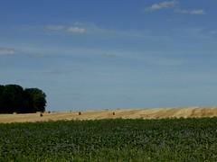 Erntezeit bevor der Regen kommt (Heide56) Tags: ernte natur