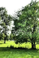 L1034655 (djelloulmarbrook) Tags: pond trees bass orfe bluegills hawks herons shadows greenery verdure blood red thoreau walden