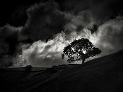 Clouds behind a Tree (StefanB) Tags: california cloud tree clouds outdoor treescape santateresacountypark em5 45200mm