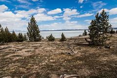 Yellowstone Lake gefroren (Daniel auf Weltreise) Tags: yellowstone nationalpark yellowstonenationalpark usa amerika lakeyellowstone lake gefroren frozen frozenlakeyellowstone