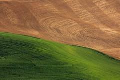 Yin-Yang of the Palouse (Beve Brown-Clark) Tags: farming farmland wheat wheatfields thepalouse palouse washington spring springtime sewashington whitmancounty bevebrownclark usa