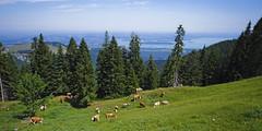 Joy of hiking (memories-in-motion) Tags: alpen bayern chiemgau chiemsee blick hiking wandern wanderlust cos nature landscape panorama trees lumixgvario714f40 panasonic gx8 dmcgx8 mft