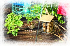 """I DO look cute up in a tree!"" (NancySmith133) Tags: brownthrasher backyardbirds centralfloridausa"