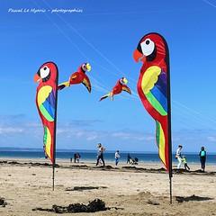 festival vent pléneuf val andré 2019 (pascal3592) Tags: festival vent pléneufvalandré perroquet cerfvolant plage