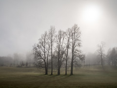 Bruma (Mauro Pesce) Tags: bruma mist misty neblina trees campo trancura chile sur south fog winter pucon