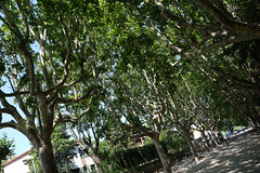 arbores osseae (raumark_pfsoe) Tags: provence arles skeleton bones tree alyscamps