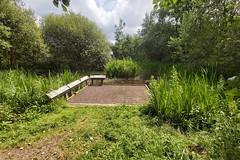 Kingstown Wildlife Pond, Carlisle, 11 July 19 (gillean55) Tags: samsung galaxy a70 smartphone north cumbria kingstownwildlifepond carlisle