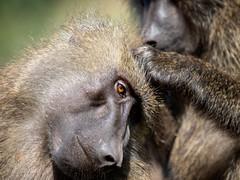 (Markus Hill) Tags: arusha tansania africa travel nature canon tanzania safari 2019